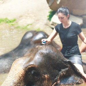 spend a day with elephants in chiang mai